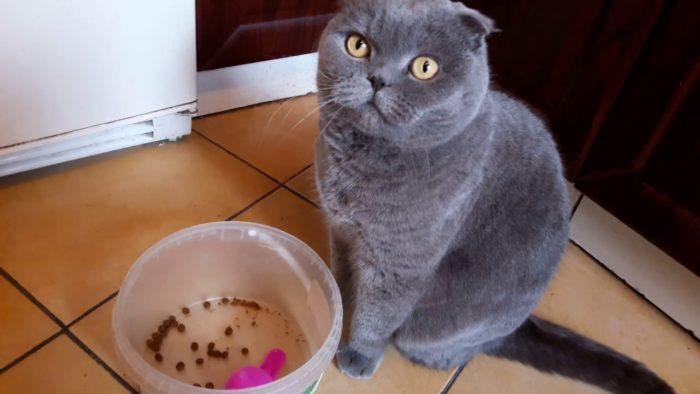 лучшие витамины для вислоухих котят thumbnail