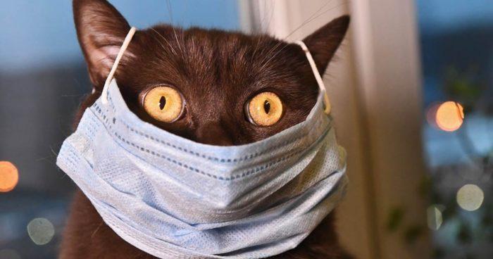 Болеют ли коты коронавирусом
