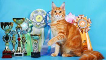 Рассписание выставок кошек в Москве в 2020 году