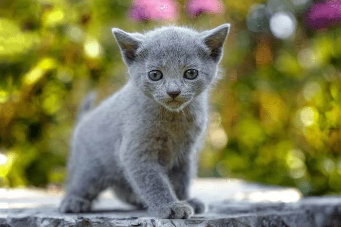 Правила выбора котенка